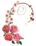 Roses and pink flowers curl Royalty Free Stock Images