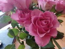 Roses. Pink flowers, roses with green leaves in house Royalty Free Stock Photography
