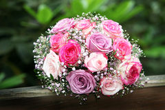 Roses in pink and lilac Stock Photos