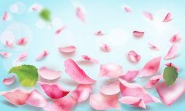 Rose and petals falling romance blank page. Roses and pink petals Light frame blank, pink roses flowers bokeh banner for spa or wedding day, mother`s day Royalty Free Stock Image