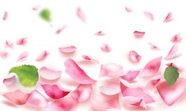 Rose and petals falling romance blank page. Roses and pink petals Light frame blank, pink roses flowers bokeh banner for spa or wedding day, mother`s day Stock Photos