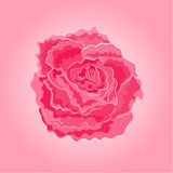 Roses pink simple vector Stock Photography
