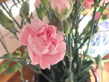 Roses. Pink roses in a vase Royalty Free Stock Photo