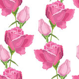 Roses. Pink roses on the white background vector illustration