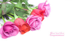 Roses postcard background Royalty Free Stock Images