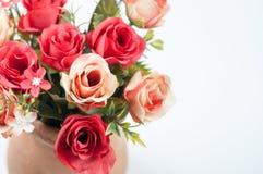 Roses in a pot Stock Photos