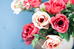 Roses in a pot Royalty Free Stock Images
