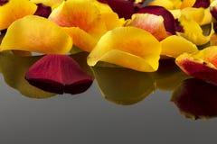 Roses pour le jour de la valentine et de mère Photo stock