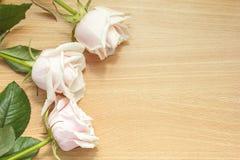 Roses pour le jour de mère Photo libre de droits