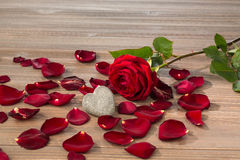 Roses pour le jour de valentine et le jour de mère Photographie stock libre de droits