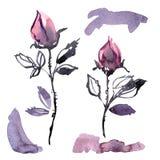 Roses pourpres peintes à la main d'aquarelle Éléments pour la conception des invitations, cartes de mariage, cartes d'anniversair Images libres de droits