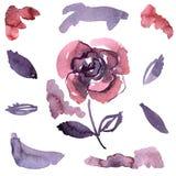Roses pourpres peintes à la main d'aquarelle Éléments pour la conception des invitations, cartes de mariage, cartes d'anniversair Photos stock
