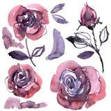 Roses pourpres peintes à la main d'aquarelle Éléments pour la conception des invitations, cartes de mariage, cartes d'anniversair Image stock