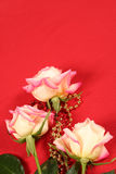 Roses on Red. Fantastic rose on red background with festive gold and red beads. Great use for background in a valentines day or mothers day design Stock Images