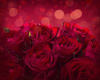 Roses. On a red background Stock Images