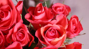 Roses in red. Bouquet ofl red roses in focus Royalty Free Stock Image