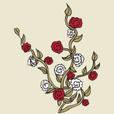 Roses with red petals on white background royalty free illustration