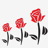 Roses with red petals on white background Royalty Free Stock Photos