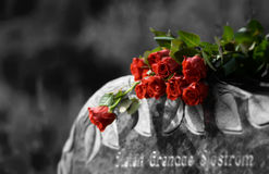 Roses are red. Picture of some Colorful roses were taking at a cemetary Royalty Free Stock Photos
