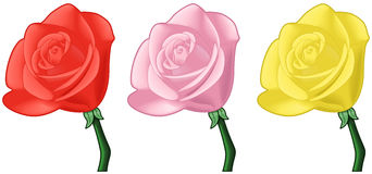 Roses - red, pink, yellow - vector art Royalty Free Stock Images