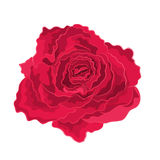 Roses red, simple. Roses red simple beautiful garden flower decorative simple vector EPS8 illustration royalty free illustration