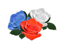Roses red white and blue isolated Royalty Free Stock Images