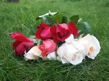Roses. Red,white,pink roses on grass Stock Photo