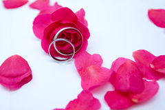 Roses and rings. Wedding concept with roses and rings Royalty Free Stock Image