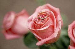 Roses and rings on it Royalty Free Stock Photography