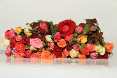 Roses of Romance. This Photo is Roses of Romance Stock Photography