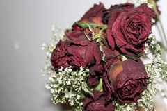 Roses. A romantic roses royalty free stock photos