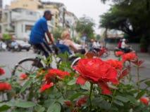 Roses romantiques rouges s'élevant près de la route Photographie stock libre de droits