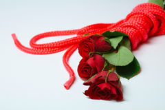 Roses and ropes. Three roses tied together with bondage red silk rope, laying on white background Royalty Free Stock Image