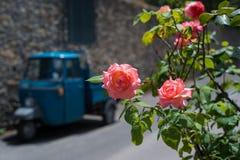 Roses rosâtres contre la rue de ville pendant le jour d'été ensoleillé Images stock