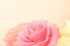 Roses rose-clair dans le style doux de couleur et de tache floue Photographie stock