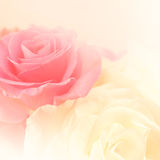 Roses rose-clair dans le style doux de couleur et de tache floue Photo libre de droits