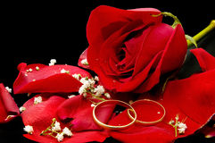 Roses and rose petals. Isolated on black background royalty free stock photos