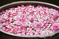 Roses and rose petals in a bowl with water Stock Images