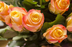 Roses. A rose is a woody perennial of the genus Rosa, within the family Rosaceae. There are over 100 species and thousands of cultivars. They form a group of Royalty Free Stock Photo