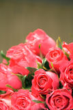 Roses roses images stock