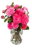 Roses roses dans un pot photographie stock libre de droits