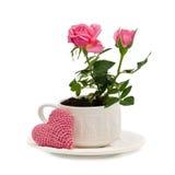 Roses roses de jardin dans une tasse Photos stock