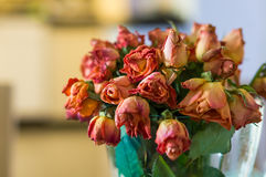 Roses roses de mort Photographie stock libre de droits