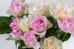 Roses roses et blanches Photographie stock libre de droits