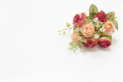 Roses roses et blanches Photo libre de droits