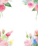 Roses roses et rouges de bel bel été coloré floral élégant mignon tendre sensible de ressort avec des bourgeons et des WI bleus j illustration stock