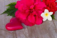 Roses roses foncées avec les coeurs et l'étiquette Photo stock