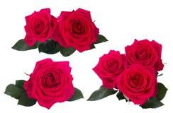 Roses roses foncées réglées Image stock