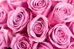Roses roses lumineuses Photo libre de droits