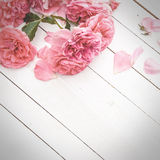 Roses roses romantiques sur le fond en bois blanc image stock